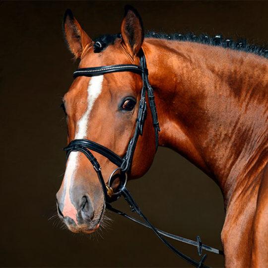 Seguro de vida de caballos